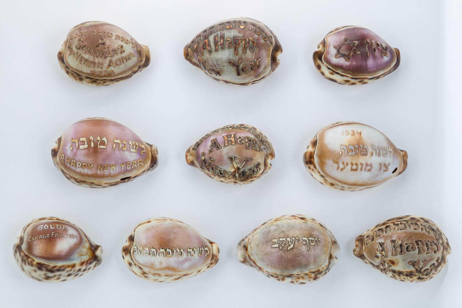 022. A COLLECTION OF TEN JUDAICA ENGRAVED COWRY SHELLS